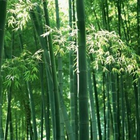 Founders at work: Story of Chinese bamboo-6