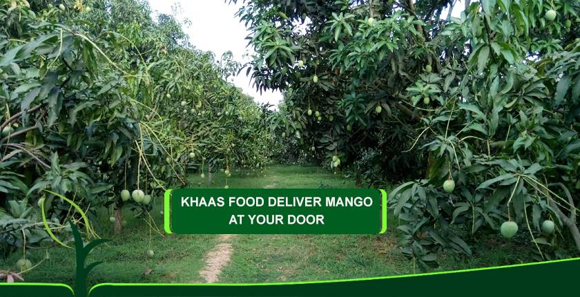 Khaas Food Mango