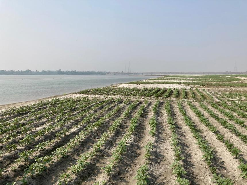 How iFarmer is Transforming Lives of Farmers in Char Areas Across Bangladesh